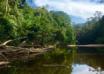 غابات تامان نيجارا Taman Negara ماليزيا