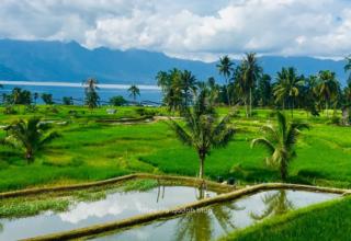 بوكيت تينقي سومطرة إندونيسيا