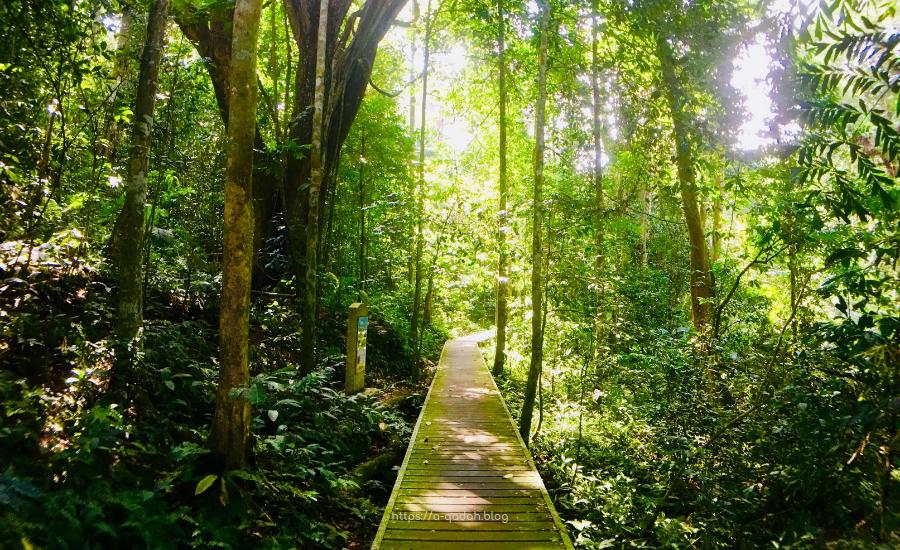 تامان نيجارا الحديقة الوطنية في ماليزيا - جنة الباحثين عن الطبيعة قريباً من  المدينة - مدونة أسما قدح