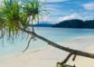 جزر راجا أمبات بابوا الغربية إندونيسيا