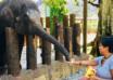 محمية الفيلة السكان الأصليين