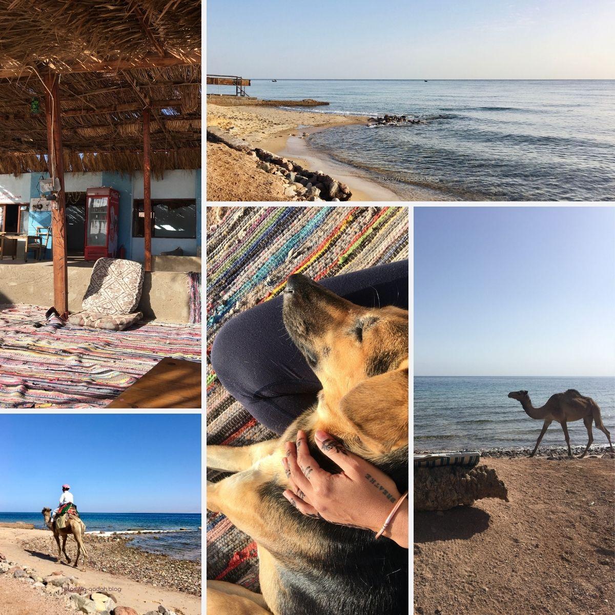 نويبع سيناء مصر سينا ستار كامب شاطئ نويبع البحر الأحمر