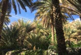 الطبيعة الجميلة في مدينة نزوى التاريخية القديمة سلطنة عمان
